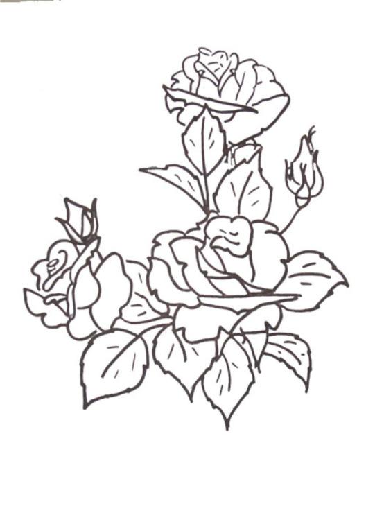 Шаблоны розы для вышивки 57