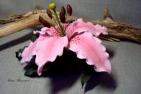 Стоимость орхидей фото цветок