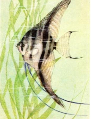 http://data29.i.gallery.ru/albums/gallery/358560-24262-103164066-400-u81366.jpg